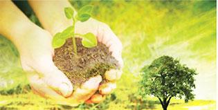 Η προσφορά της περιβαλλοντικής εκπαίδευσης στην καλλιέργεια αξιών