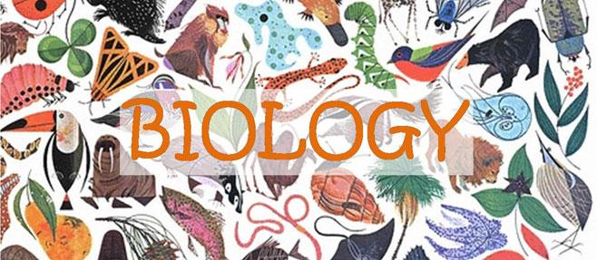 13ος Πανελλήνιος Διαγωνισμός Βιολογίας:  4η θέση στην Κορινθία και 30ή πανελλαδικά